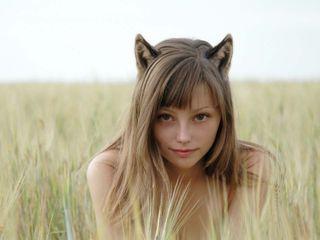 Kitten_in_the_fieldc