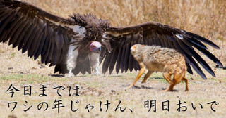 Vulturewingsfeathers_2