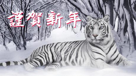 White_tiger_panthera_tigris